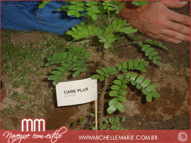 Árvore do projeto Care Plus