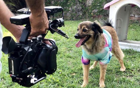 Programa 'Sessão Pet' estreia sábado (24), na Rede Bahia
