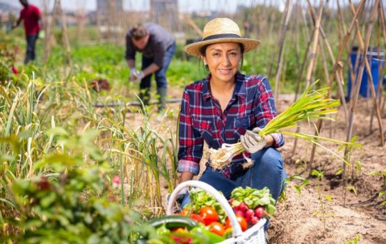 Evento online vai debater o agronegócio na educação de crianças e jovens