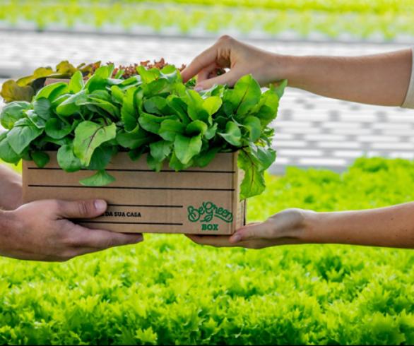 Salvador terá sua primeira fazenda urbana em outubro